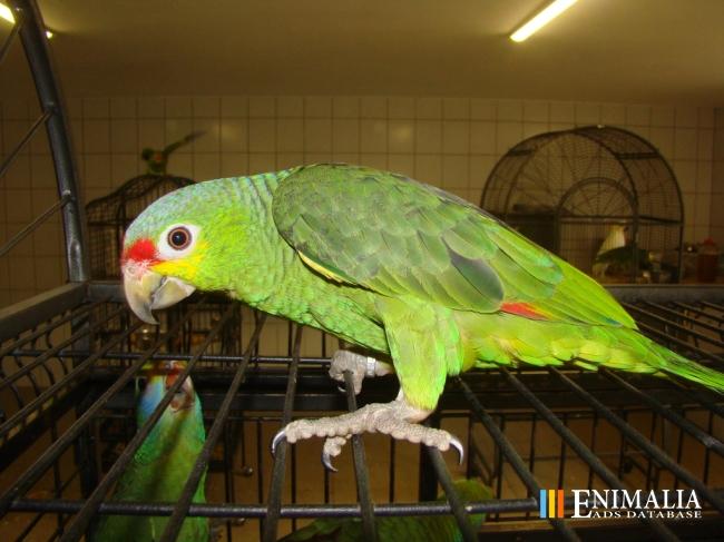 Exotic Bird Breeders