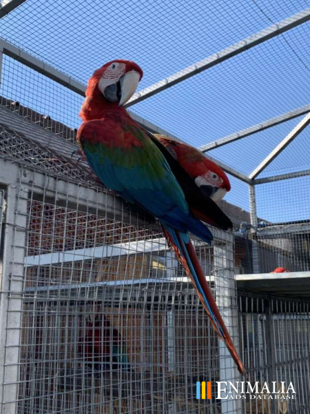 Classifieds | Parrots for sale: African Greys, Cockatoos