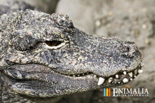 Crocodile Python Caiman Stingray Skin Leather Mix Hide Scraps 300g Free Ship